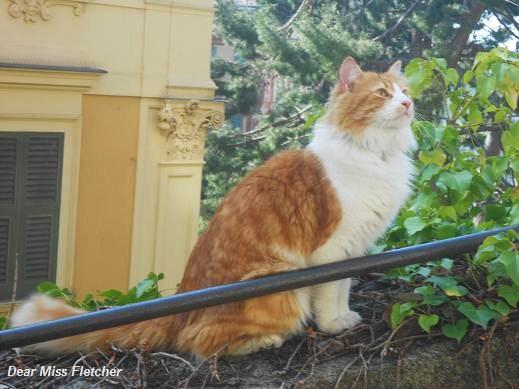 Gatto (6)