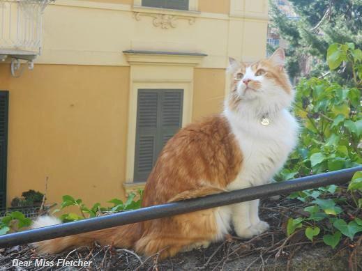 Gatto (8)