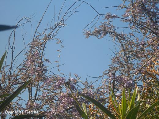 Primavera (10)