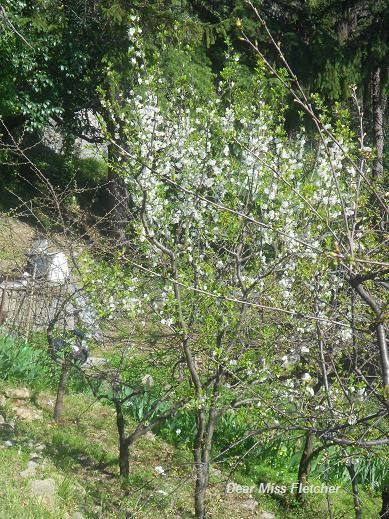 Primavera (11)