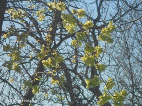 Primavera (12)