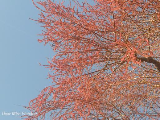Primavera (14)
