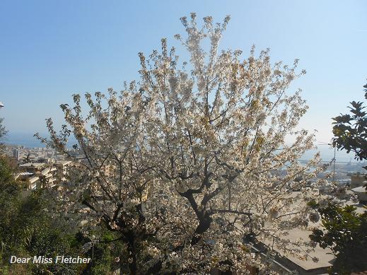 Primavera (15)