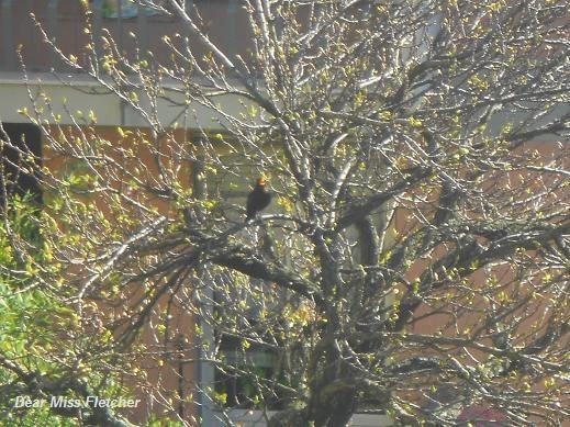 Primavera (17)