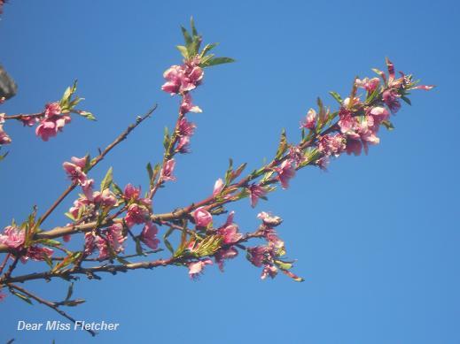 Primavera (19)