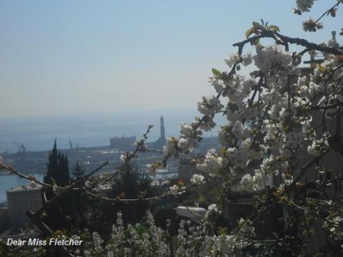 Primavera (22)