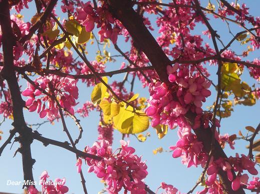 Primavera (5)