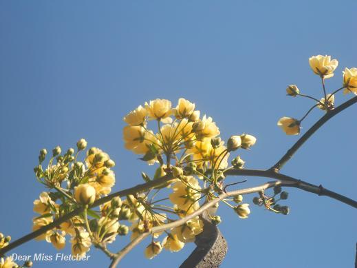 Primavera (6)