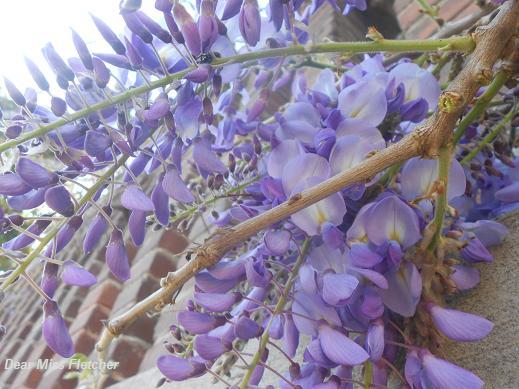 Primavera (8)
