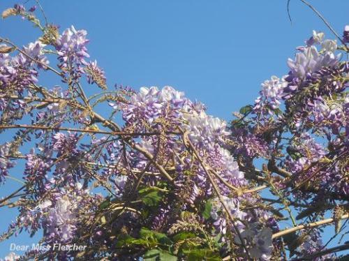 Primavera (9)