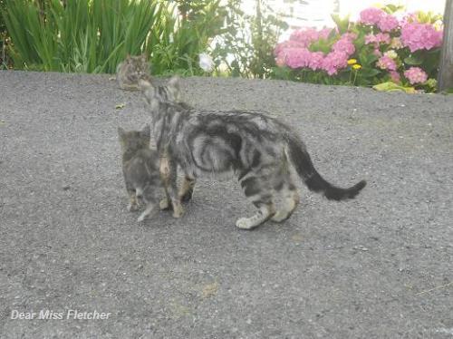 Gatti (1)