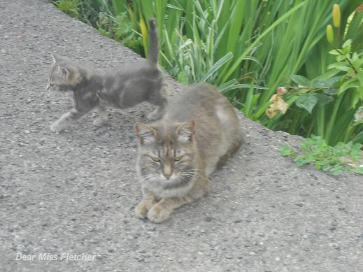 Gatti (3)