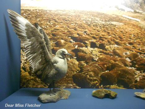 Museo Nazionale dell'Antartide (13)