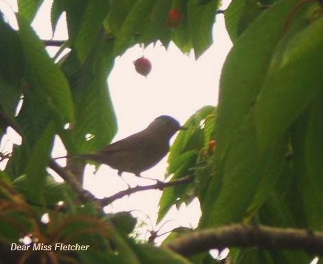 Uccellino - Copia