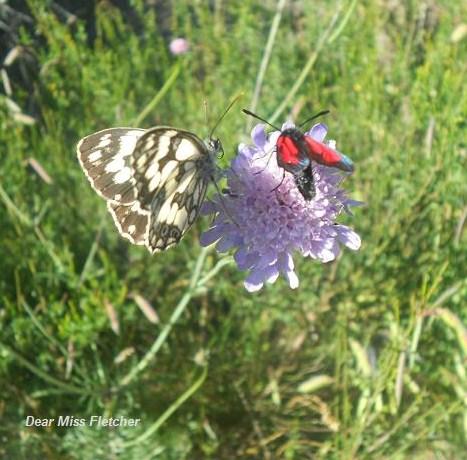 Farfalla (10)