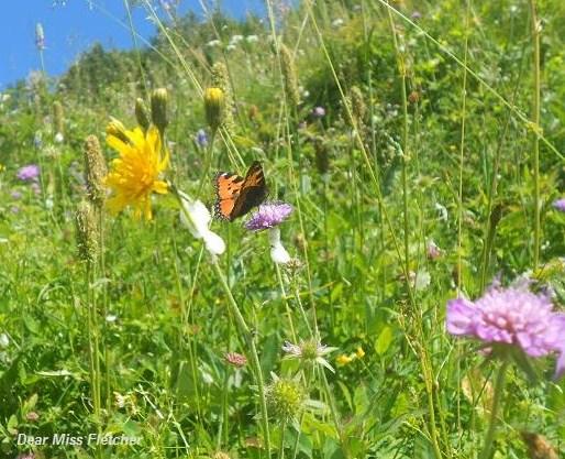 Farfalla (13)