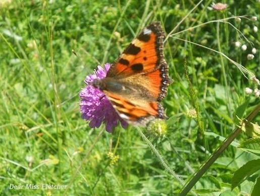 Farfalla (2)