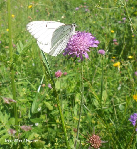 Farfalla (6a)