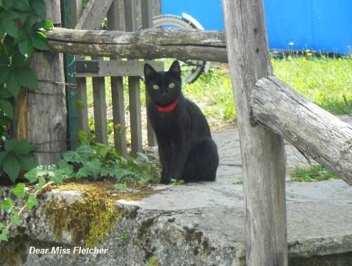 Gatti (14)