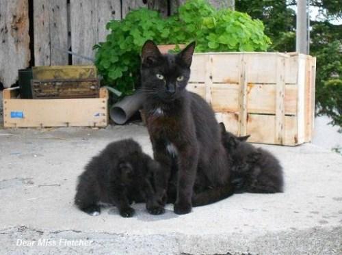 Gatti (19a)