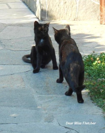 Gatti (9)