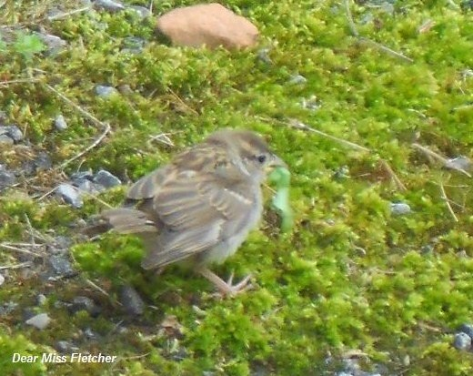 Uccellini (11)