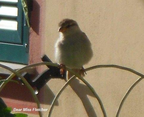 Uccellini (12)