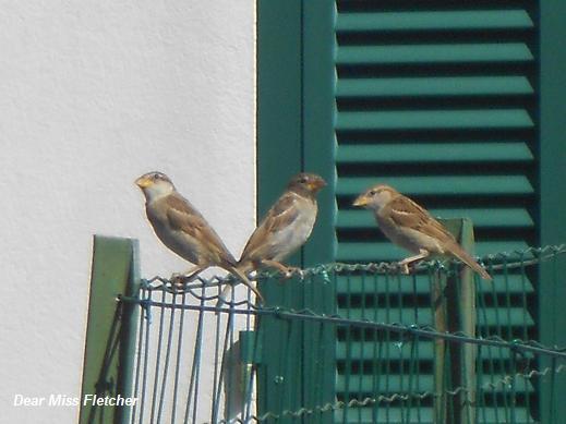 Uccellini (13)