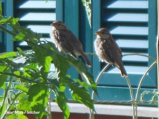 Uccellini (16)
