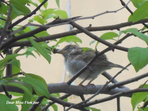 Uccellini (17)