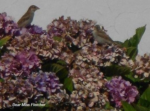 Uccellini (5)