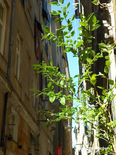 Via della Maddalena (25)