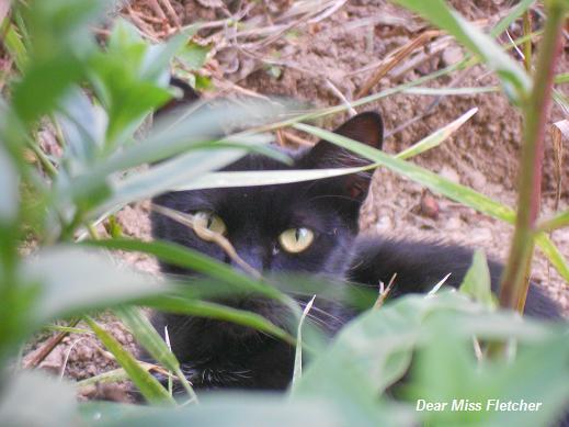 Gatto nero (2)