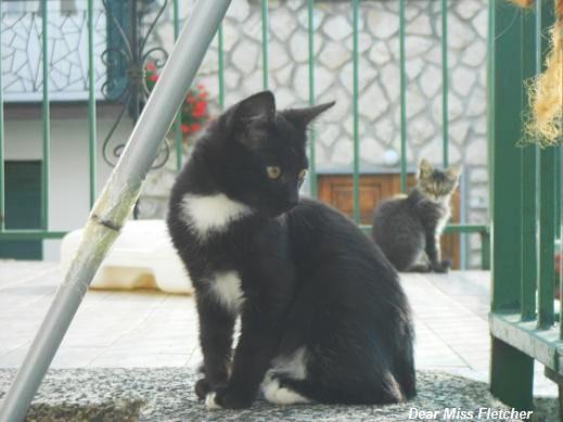 Gatto nero (3)