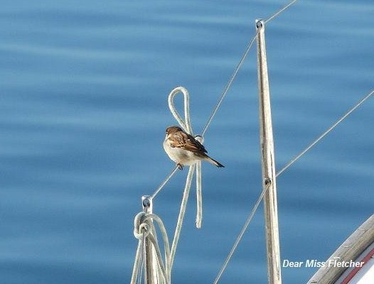 Uccellini (10)
