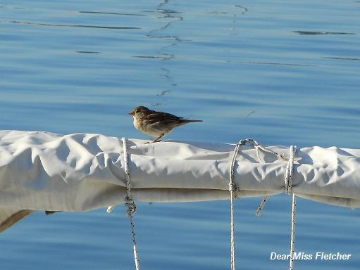 Uccellini (3)