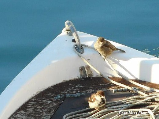 Uccellini (4)