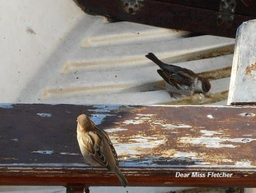 Uccellini (6)