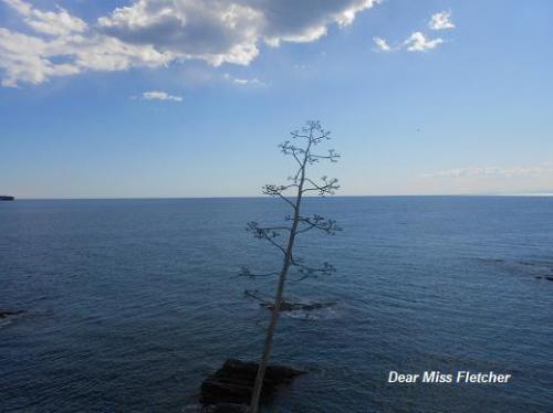 Mare (2)