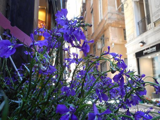 Via Luccoli (20)