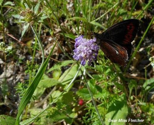 Farfalle (13)