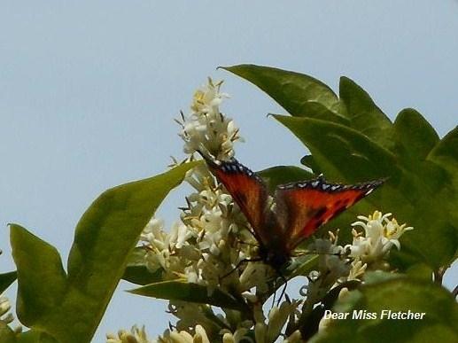 Farfalle (2)