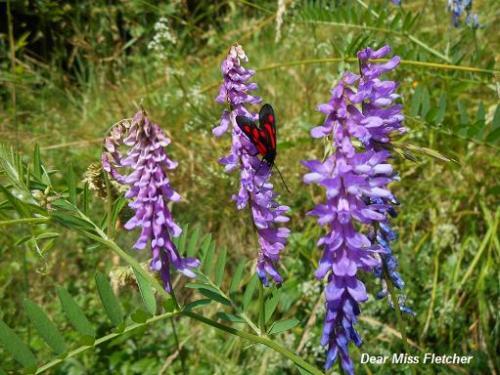 Farfalle (4)