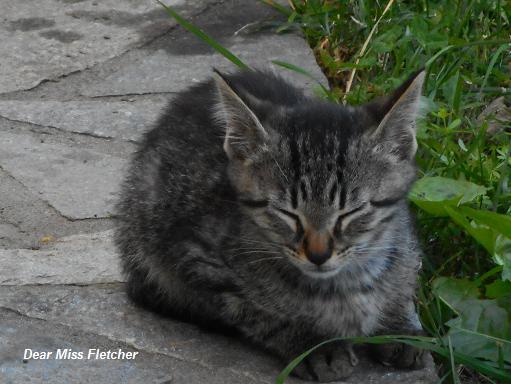 Gatti (12)