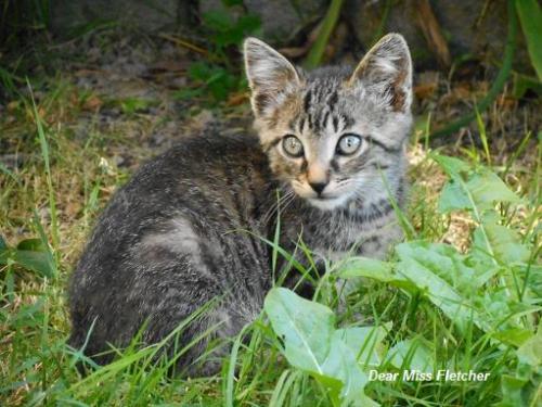 Gatti (16)