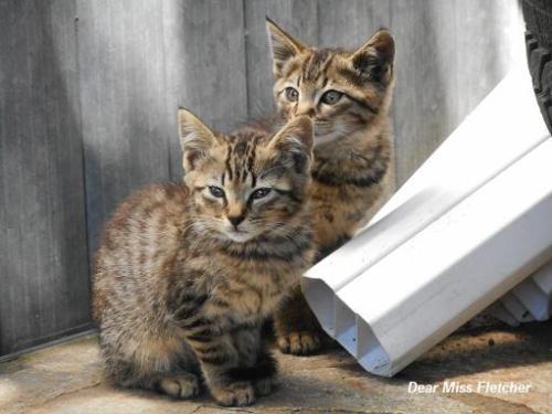 Gatti (5)