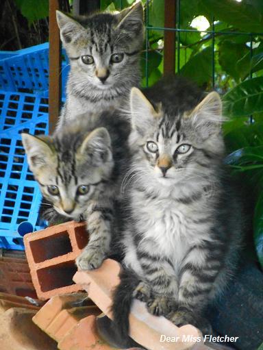 Gatti (6)