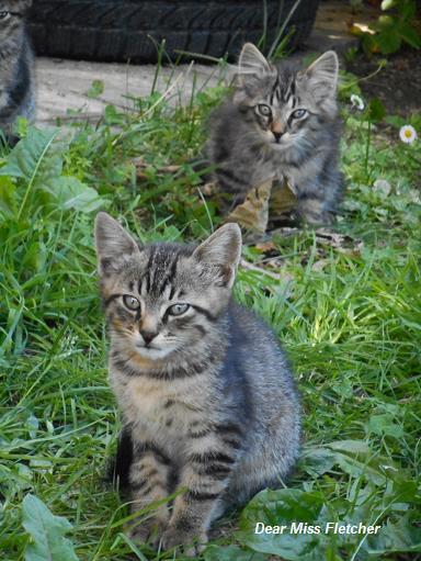 Gatti (8)