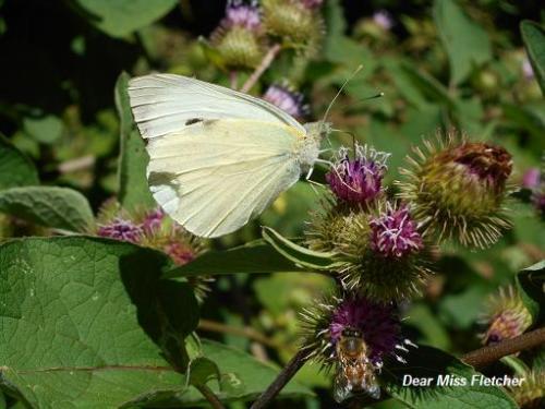 Farfalle (10)