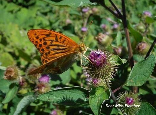Farfalle (11)